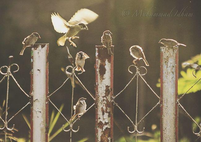 A Band of Tree Sparrow - Sun Bathing & Chats EyeEm Best Shots EyeEm Indonesia EyeEm Best Shots - Nature Wildlife