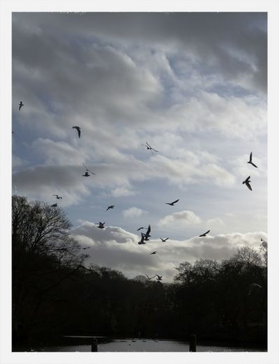 Birds Sky And Clouds Sky_collection Nature_collection