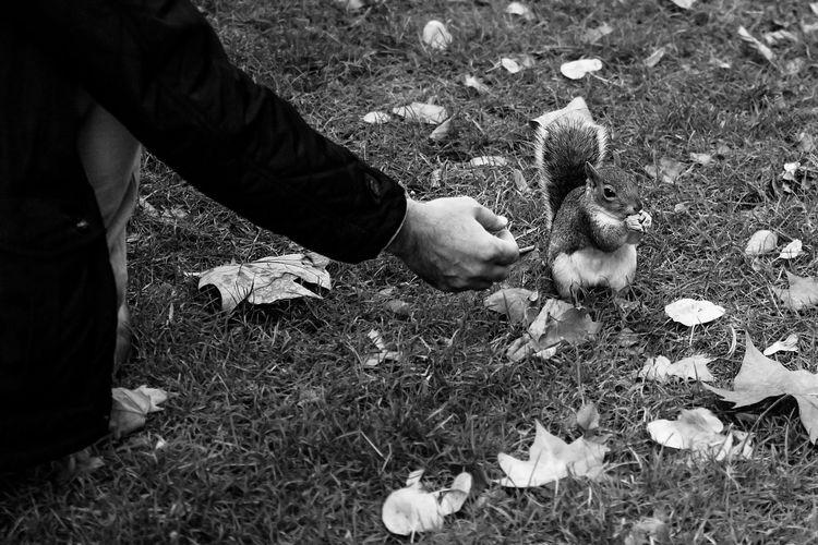 Man hand-feeding little squirrel in Hyde Park, black and white Animals In The Wild Autumn Feeding Animals London Squirrel Black And White Black And White Photography Fall Feeding Squirrels Hand Human Body Part Human Hand Hyde Park Hyde Park, London Mammal Monochrome monochrome photography One Animal One Person Outdoors Real People