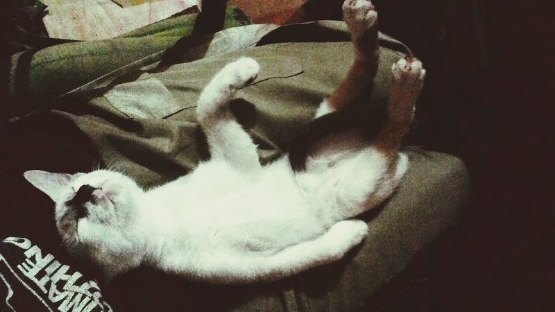 Playdead Taking Photos Check This Out Kitties Sleeping Cat Don't Disturb Me Relaxing