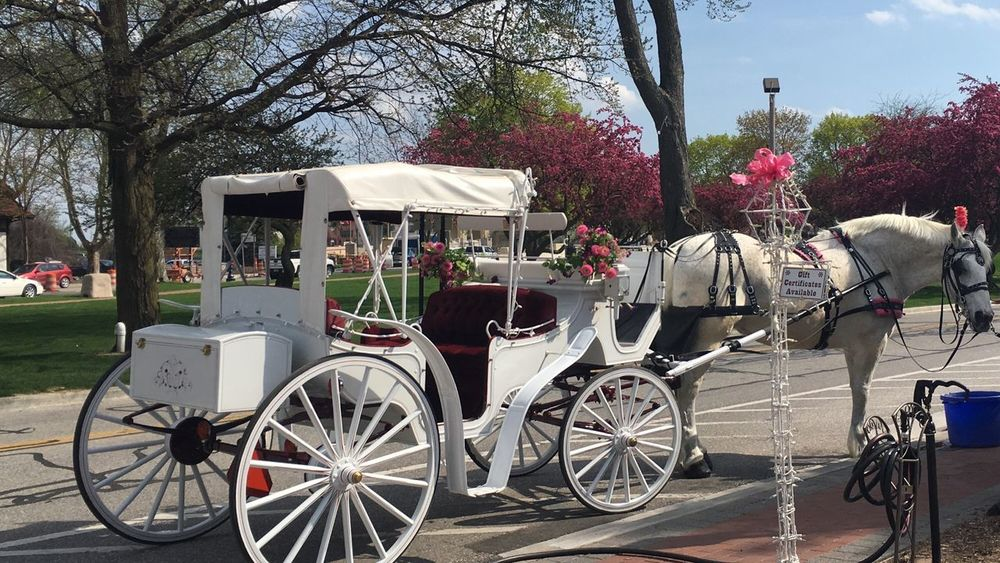 Mode Of Transport Transportation Horse And Carriage Horse Outdoors Tree Flowering City Beautiful Day Blue Sky Spring Spring 2017 Frankenmuth Michigan United States