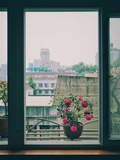 Window Flower No People Window Sill Day Growth City Nature Cityscape Window Box Close-up Freshness Sky TCPM Break The Mold Canon Cannon M3
