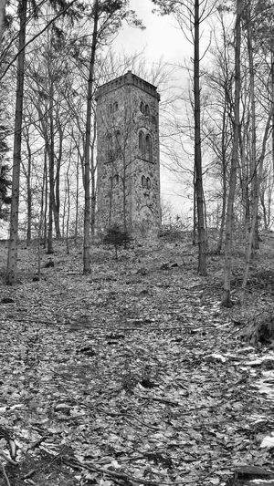 Nature Photography Smartphonephotography Forest Architecture Tower Eyem Nature Lover Tree Black & White Blackandwhite Zielony Las