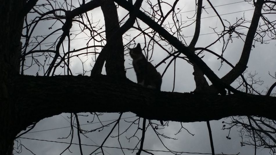 Cat stuck in the tree.