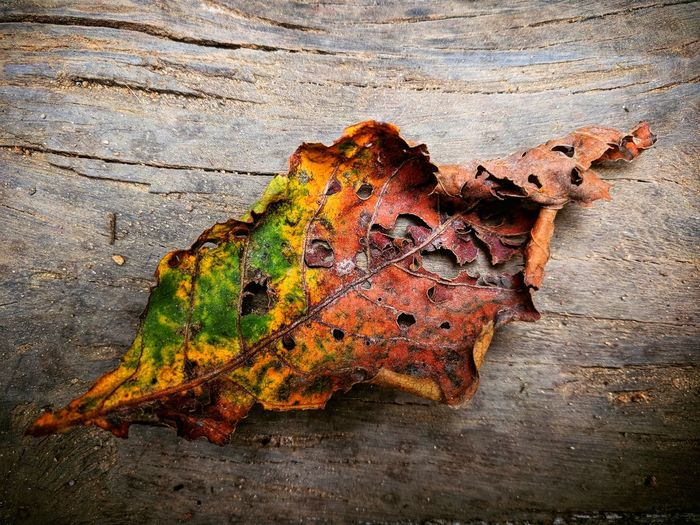 Leaf Rotting Textured  Sand Close-up Fall Leaves Dried Autumn Leaf Vein Autumn Collection