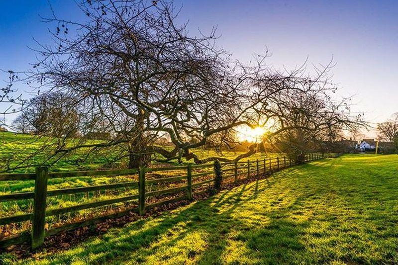 Tree_captures Tree Park Sunrise Tree_hunters Trees Bluesky