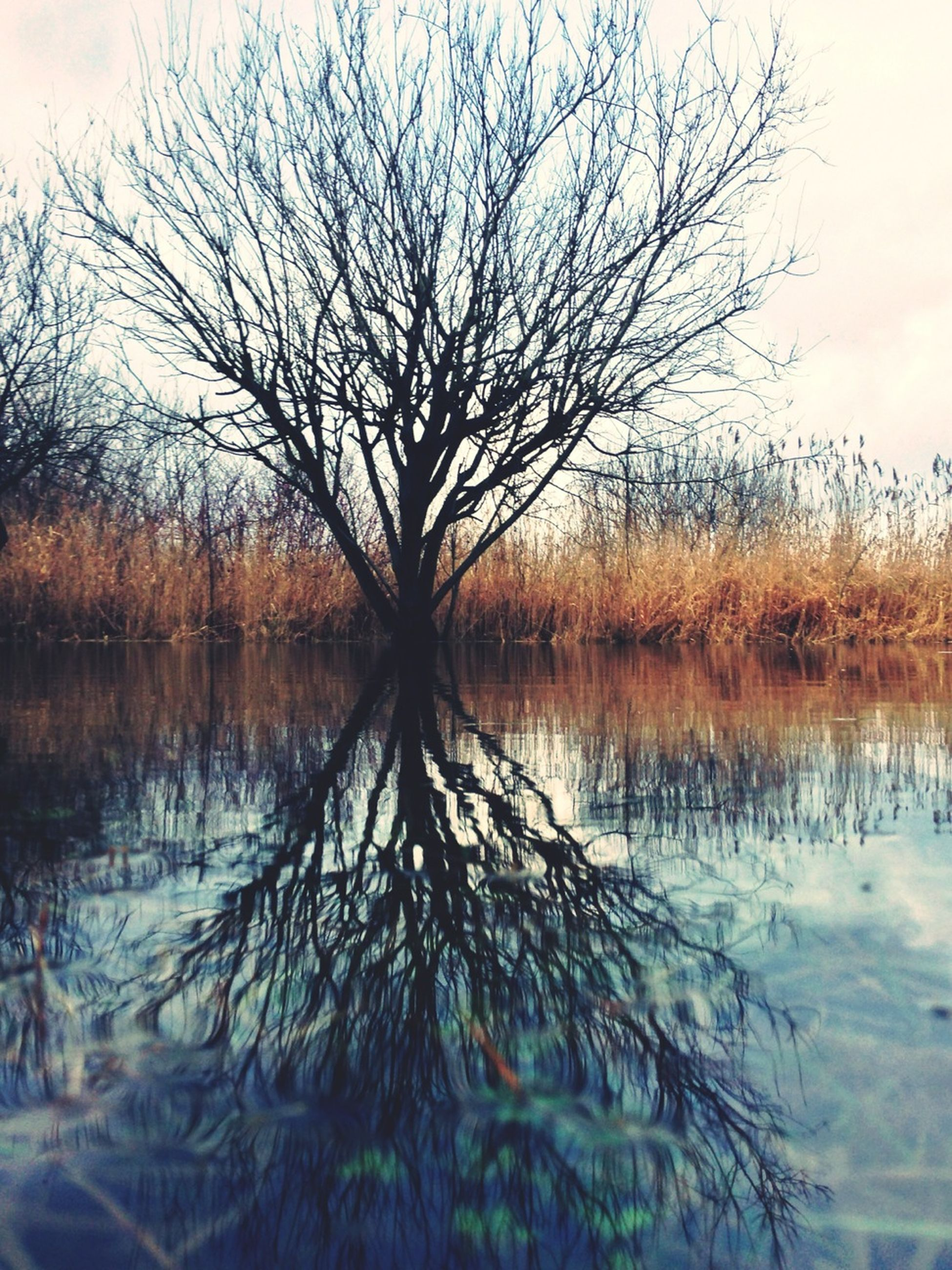 water, bare tree, lake, reflection, tranquility, tranquil scene, tree, waterfront, scenics, branch, beauty in nature, nature, sky, standing water, lakeshore, idyllic, calm, outdoors, no people, non-urban scene