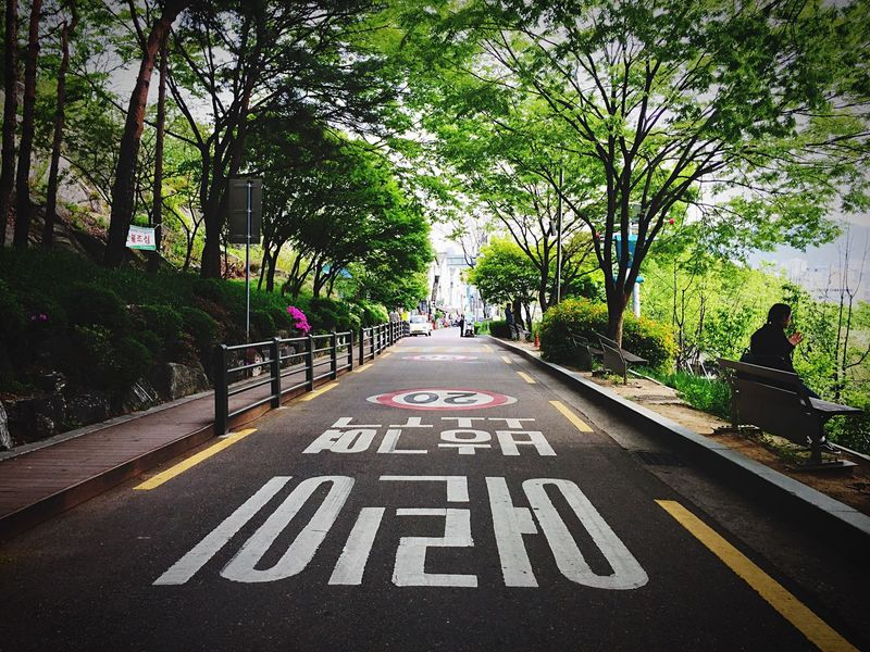 The Way Forward Tree Day Street Outdoors Road Sign Nature City Road Seoul ASIA Hyehwa
