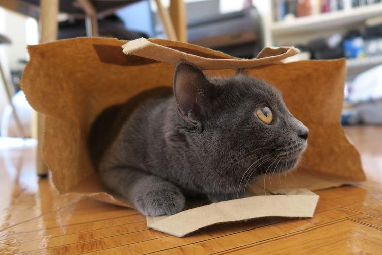 Close-Up Of Cat Hiding In Paper Bag On Hardwood Floor
