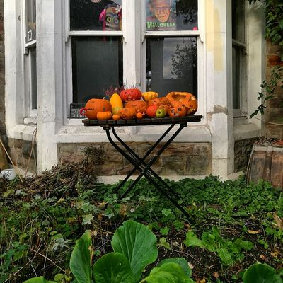 Window Growth Plant No People Architecture Day Pumpkin Pumpkinpatch Pumpkin Carving Pumpkins Urban Urbanphotography Halloween Frankenstein