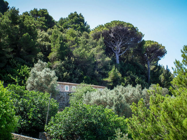 Alberi Albero Baum Bauma Beauty In Nature Day Estate Freshness Green Color Growth Maiorca Mallorca Nature Nature No People Outdoors Sky Sommer Spagna SPAIN Spanien Summer Tree Tree Trees