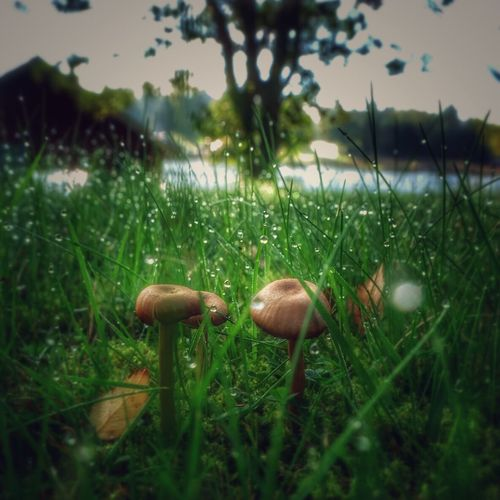Grass Mushroom Growth Close-up Beauty In Nature Nature Green Color Growing Wilderness Focus On Foreground Rain Drop Blade Of Grass Nature Landscape_Collection Beauty In Nature Morning Drops Nature_collection