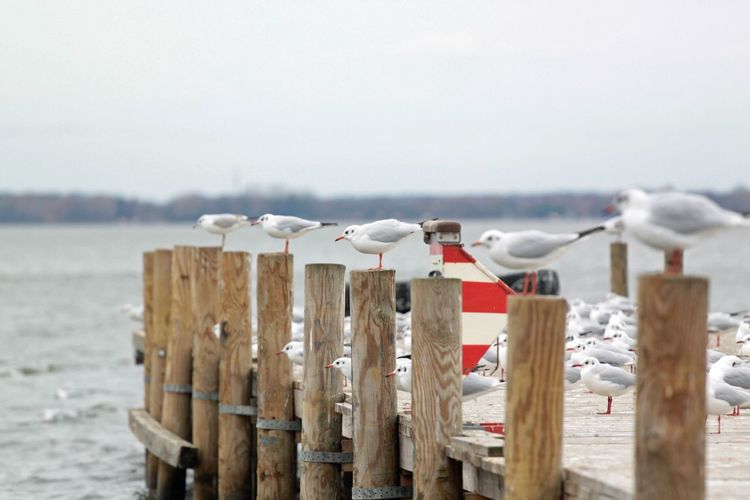Seagulls perching on wooden posts by lake against sky