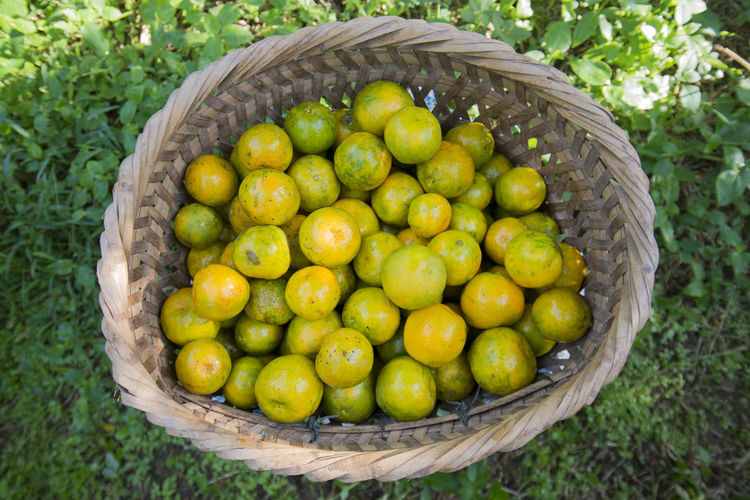 High Angle View Of Orange Fruits In Wicker Basket On Field