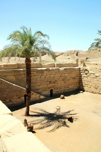 Date palm tree on field amidst wall