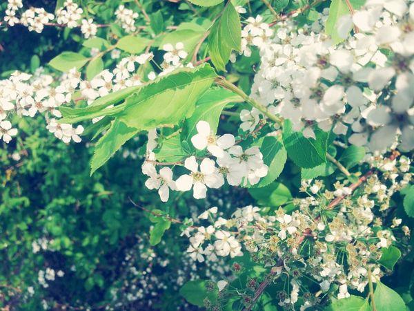 Flowers Take Photo 평창동
