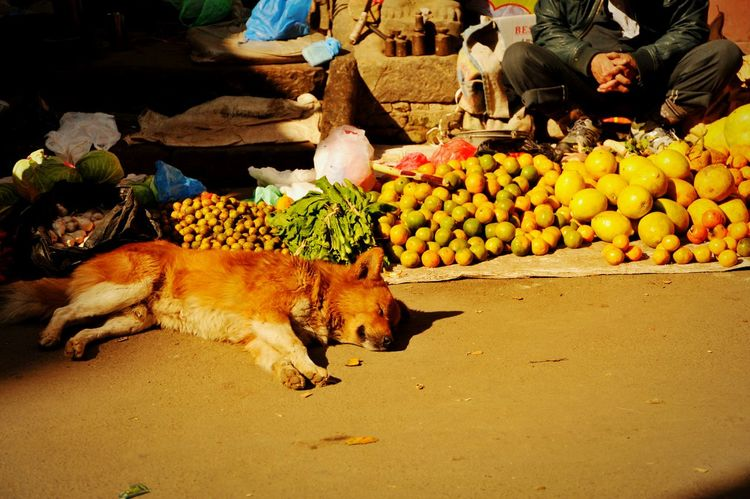 RePicture Travel Nepal Streetphotography Hello World Dog Anmale Pray For Nepal The Traveler - 2015 EyeEm Awards Summer Dogs