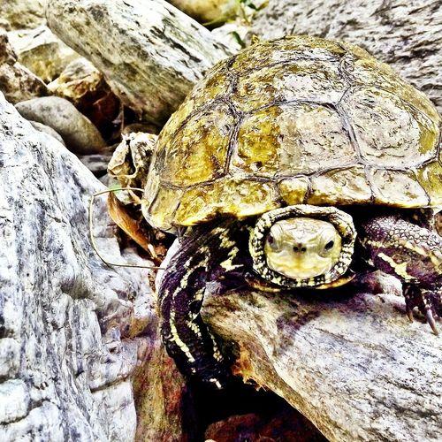 Turtle Turtle Love Manzara Taking Photos Follow Size