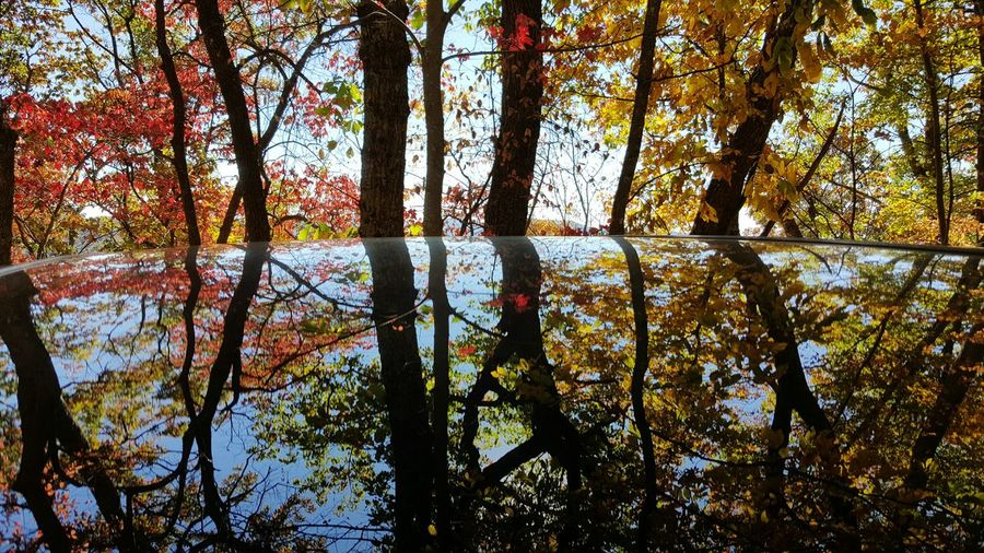 Tree Nature Beauty In Nature Growth No People Scenics Tranquility Lake Tranquil Scene Day Outdoors Sky Backgrounds Branch Glass Fall Fall Leaves Autumn Season  Fall Colors North Carolina