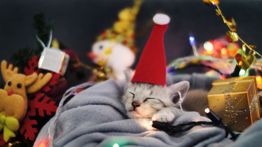 Close-up of kitten wearing santa hat in basket amidst christmas decorations