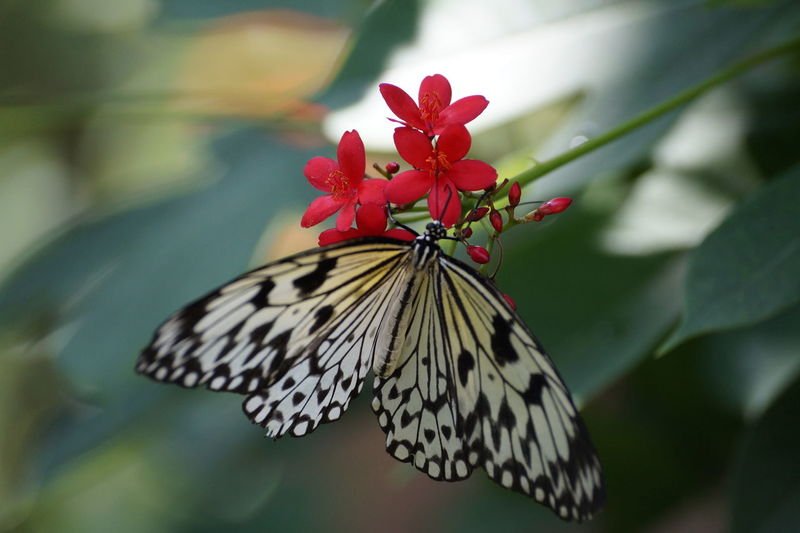 Animal Markings Beauty In Nature Blooming Butterfly Butterfly - Insect Close-up Day Flower Flower Head Focus On Foreground Fragility Freshness Growth Insect Natural Pattern Nature No People Outdoors Petal Pink Color Plant Pollination Red Selective Focus Wildlife
