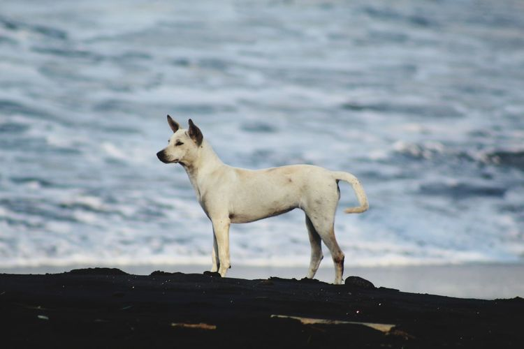 Dog standing in the sea