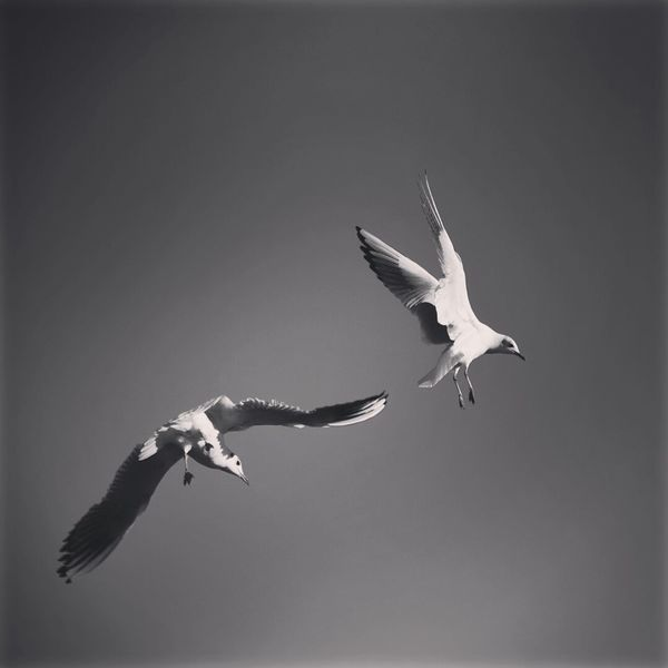 Seagulls Sky Flying High Blackandwhite Elementpeople