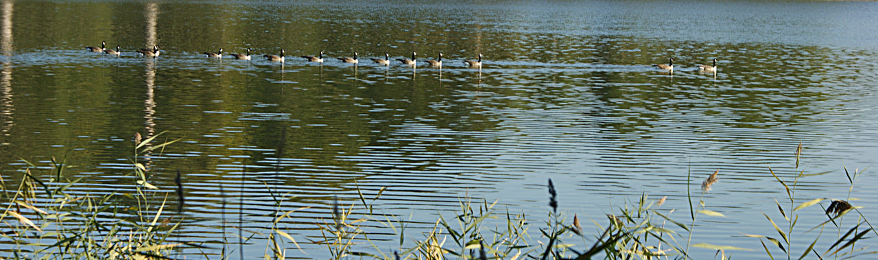 View of birds swimming in lake