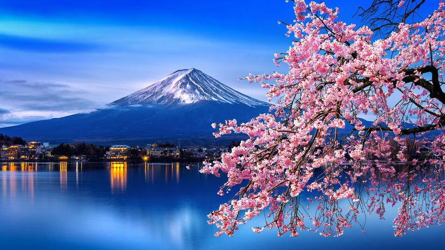 Fuji mountain and cherry blossoms in spring, Japan. Beauty In Nature Plant Mountain Tree Sky Flower Nature Flowering Plant Springtime Cherry Blossom Fragility Scenics - Nature Water Blossom Pink Color Growth Snow Freshness Reflection Outdoors No People Cherry Tree Snowcapped Mountain
