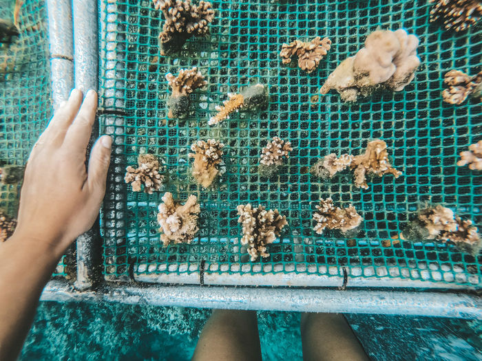 Low section of woman standing by coral garden planting corals