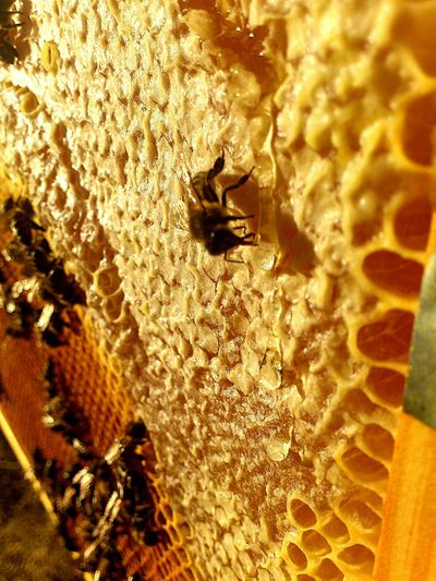 bee eating honey! Nature_lover Nature_collection EyeEm Best Shots EyeEm Best Shots - Nature