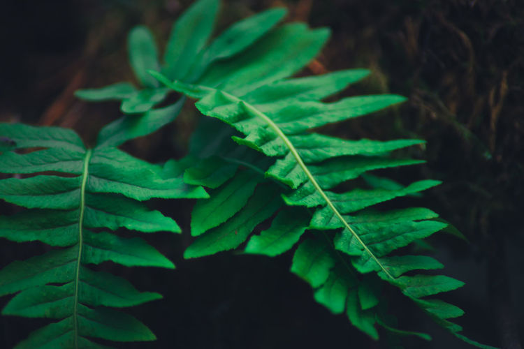 Macro Photography Beauty In Nature Close-up Day Fern Fragility Freshness Green Color Growth Leaf Nature No People Outdoors Plant