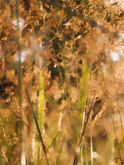 Beauty In Nature Close-up Day Dreamy Fragile Full Frame Grass Growth Nature Nature_collection No People Outdoors Plant