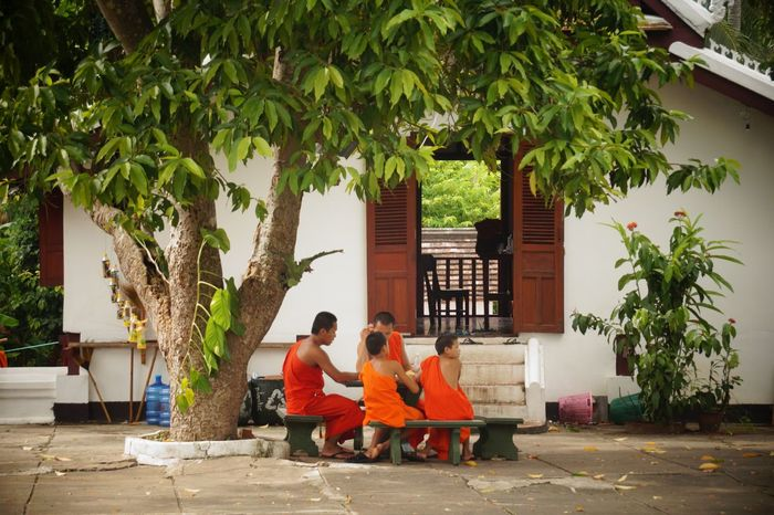 Adult Architecture Budism Building Exterior Built Structure Day Friendship Full Length Laos Lifestyles Men Monks Monks In Temple Nature Orange Color Outdoors People Real People Sitting Togetherness Tree Tree Women Young Adult Young Women