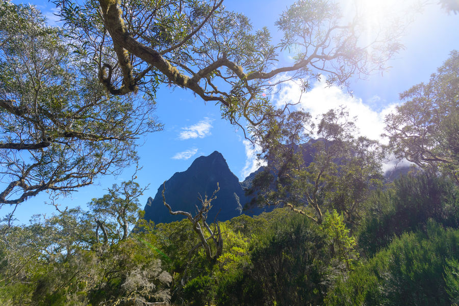 Peak in the cirque of Mafate, la Reunion island Beauty In Nature Branch Clear Sky Day Freshness Growth Indian Ocean Low Angle View Mafate Nature No People Outdoor Outdoors Reunion  Reunion Island Sky Sun Star Tree Tropical Wilderness