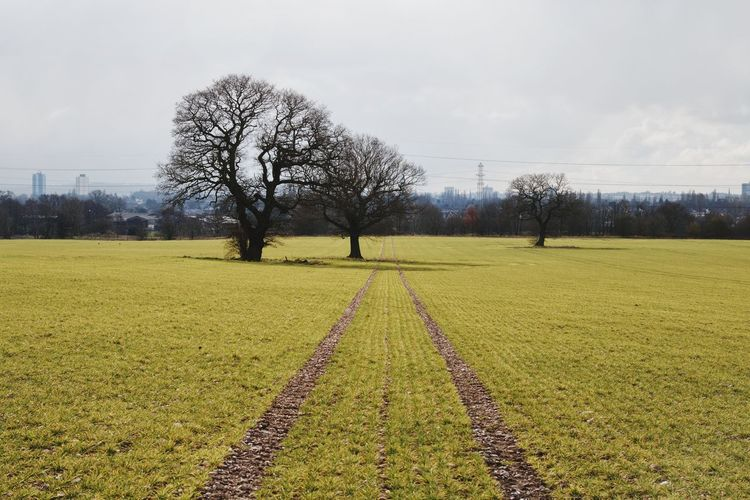 Leading Lines Landscape Agriculture Outdoors Tree Day No People Sky Grass Nature