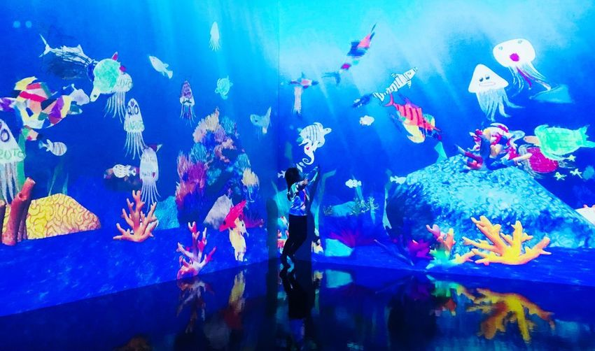 Painted Underwater Futuristic Playground Teamlabislands Hologram Arts Arts And Crafts Fish Water Large Group Of Animals Sea Life Underwater Swimming EyeEmNewHere