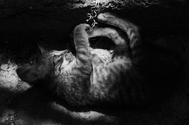 Cat 6 Cats Cat♡ Domestic Cat Domestic Animal Animals Cats Lovers  Cats 🐱 Cats Eyes Cute♡ Cat Lovers Cute Cats Cute Animals Cute Monochrome Photography AI Now HUAWEI Photo Award: After Dark The Art Of Street Photography
