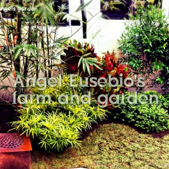 Enjoying Life Landscaping_services EyeEm Best Shots - Landscape Good Service Quality Originality Satisfaction Check This Out