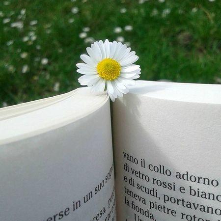 Flower Flowers Garden Nature Book Julesverne