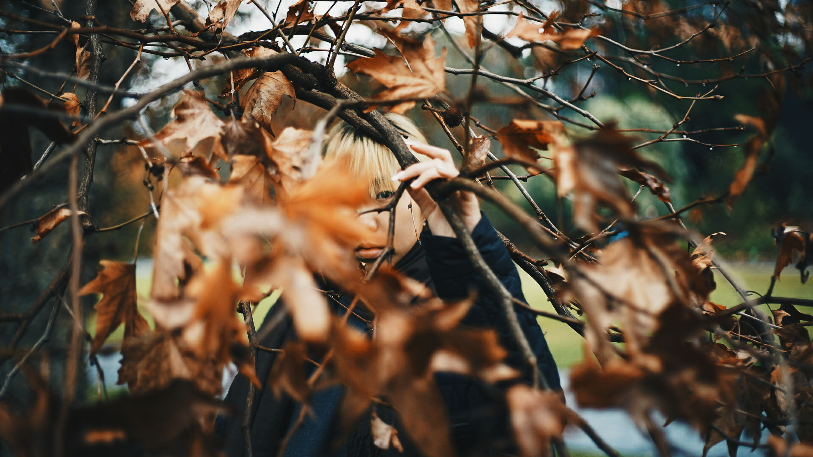 leaf, branch, autumn, leaves, growth, nature, close-up, focus on foreground, tree, twig, change, selective focus, plant, day, tranquility, outdoors, no people, beauty in nature, full frame, backgrounds