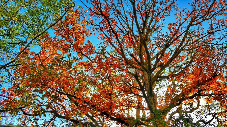 Tree Low Angle View Branch Nature Full Frame Backgrounds Beauty In Nature Day Growth No People Outdoors Sky Scenics Clear Sky Close-up Colourful Colours Of Nature Nature's Diversities Nature Trees And Sky Treescape Colour Explosion Colorful Colours Beautiful Nature My Best Photo
