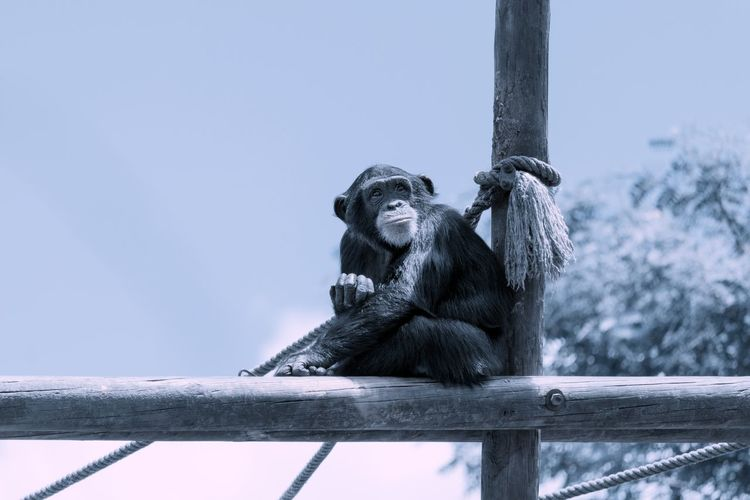 Low angle view of monkey sitting on a pole