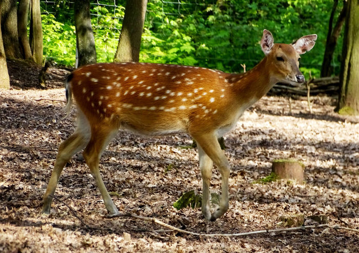 Animal Themes Mammal Nature Sunlight Tree Deer Deer ♥♥ Animals Animal_collectionBeauty In Nature Nature_collection EyeEm Gallery From My Point Of View EyeEm Best Shots Animal Photography