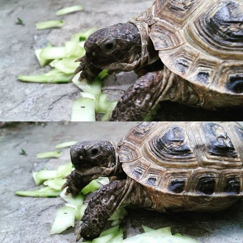 Photo_by_vs VSCO Instagram_photo Like_it Beautiful VSCAM Vscamera Turtle Animal Cool