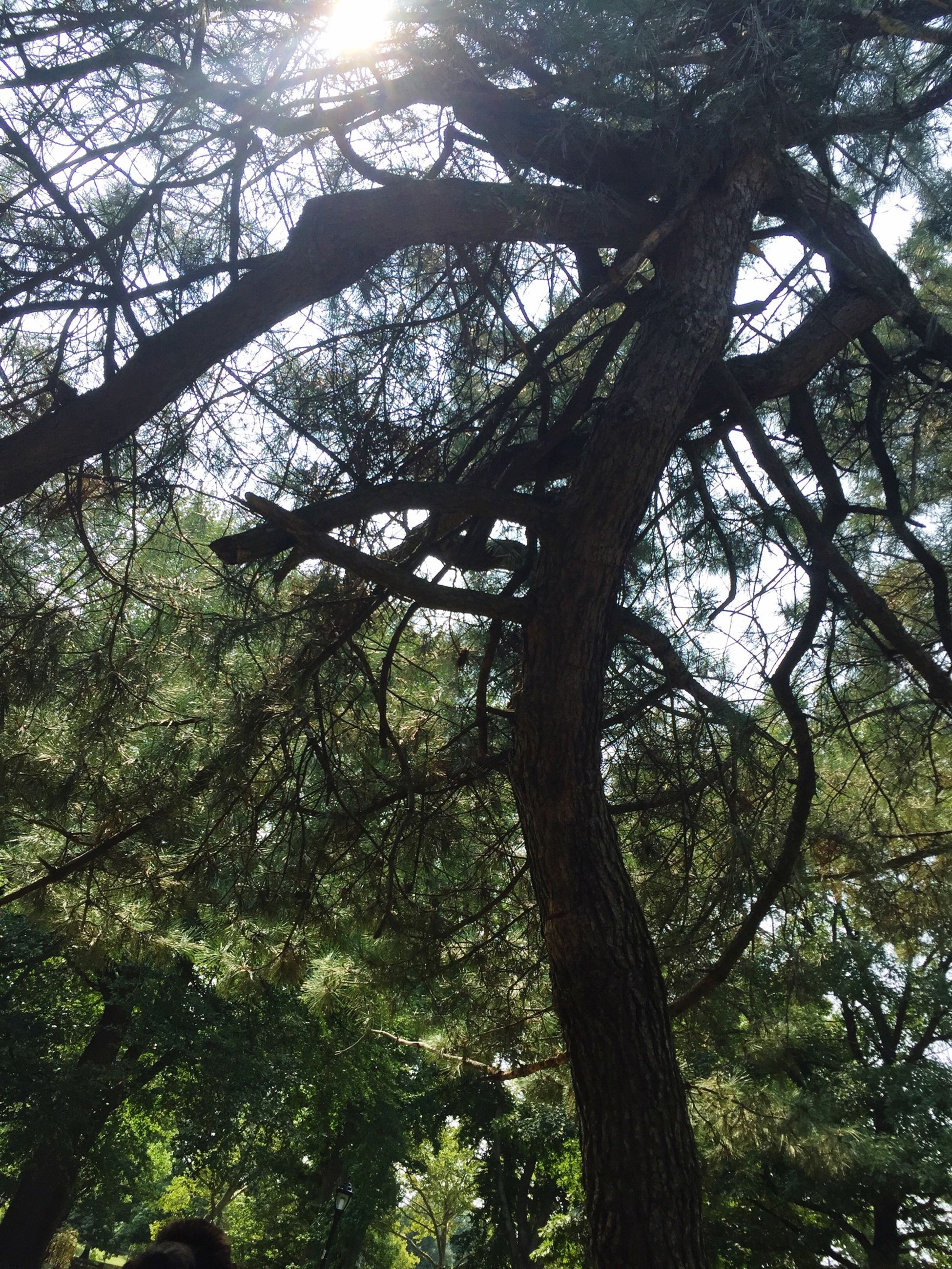 tree, tree trunk, branch, low angle view, growth, tranquility, nature, forest, sunlight, beauty in nature, woodland, tranquil scene, green color, day, scenics, outdoors, no people, sky, tall - high, sun