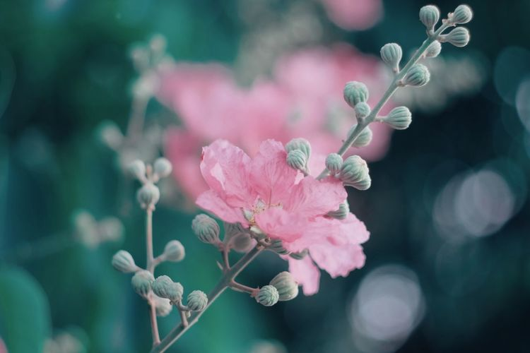 Nature EyeEmNewHere Flowers Flower Collection Welcome To Black