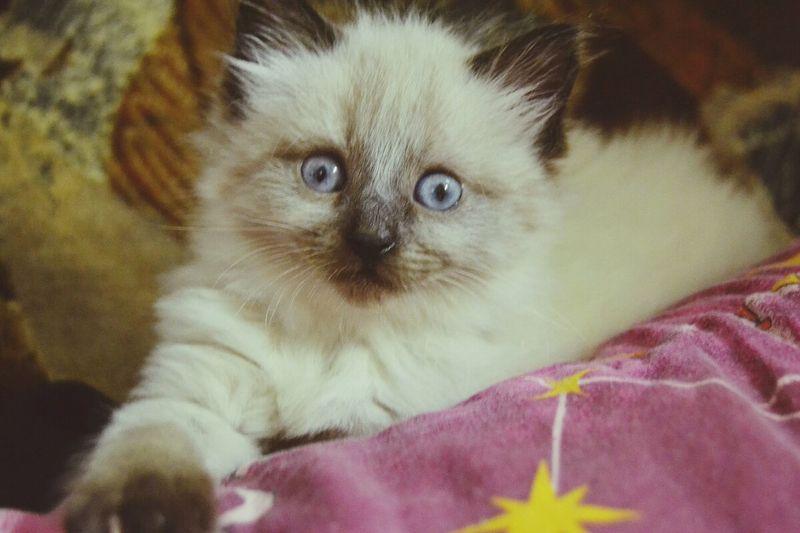 Cat Animals Cute Pets Cats