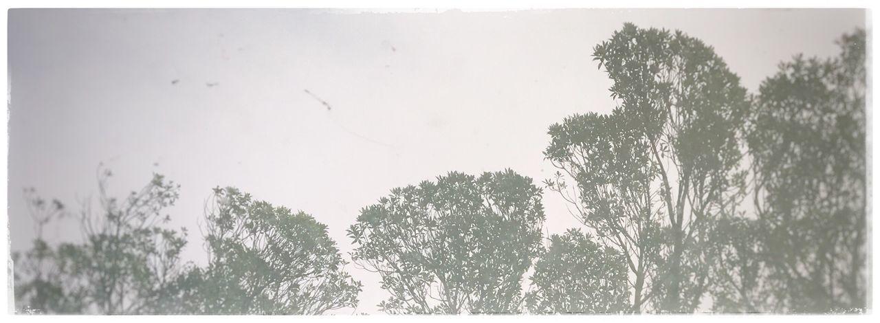 Ngaio. Tree Sky The Week On EyeEm