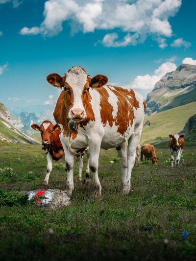 Herd of cows on field against sky